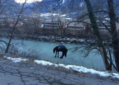 Tierrettung Pferd im Rotten