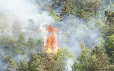 Grosse Waldbrandgefahr