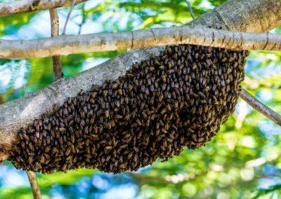Bienen Kunsthaus zur Linde