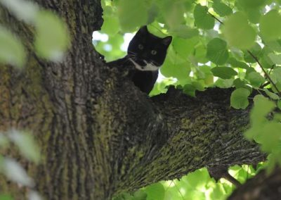 Tierrettung Katze im Schacht